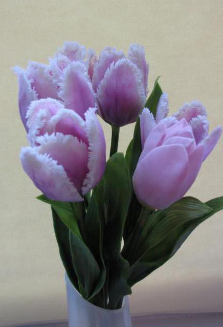 нежные тюльпаны, цветок