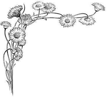 графика, монохром, цветы,
