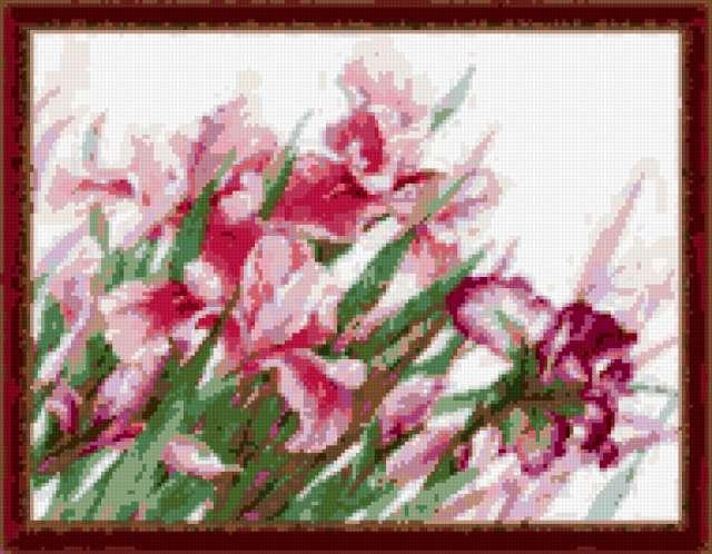 Ирисы риолис, предпросмотр