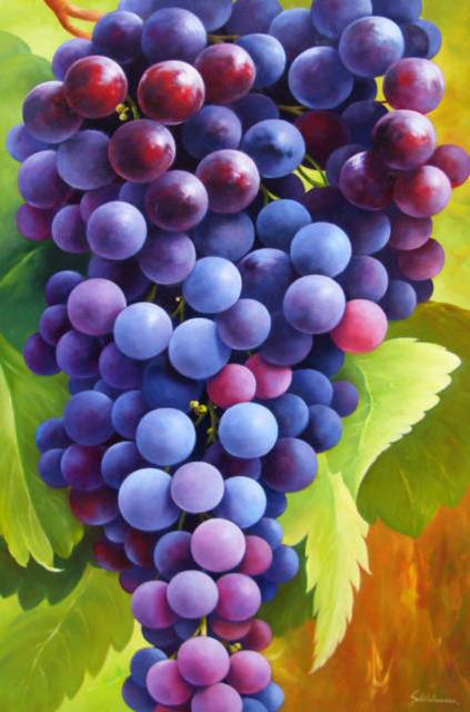 кисть винограда фото