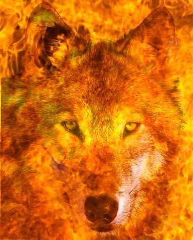 Огненный волк,