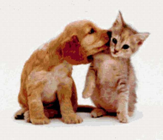 Поцелуйчик, щенок, котенок