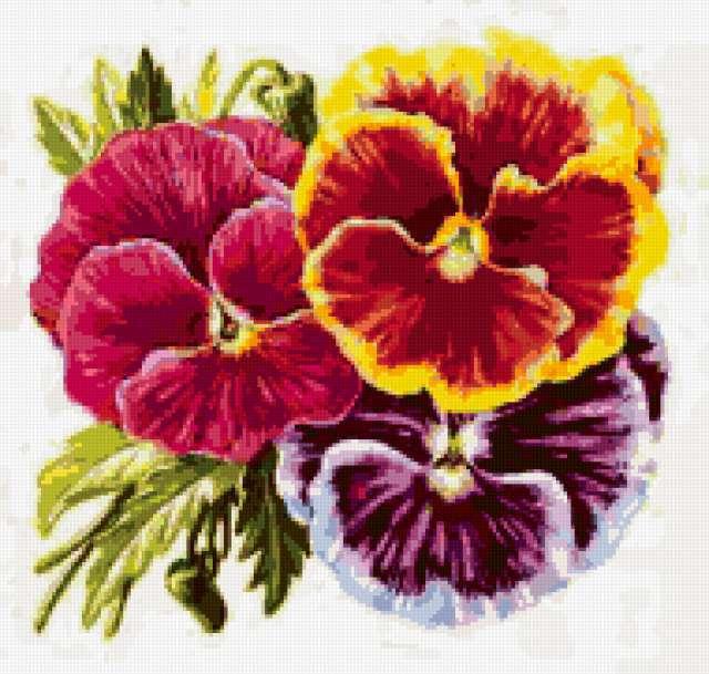 Виолы нежные цветы