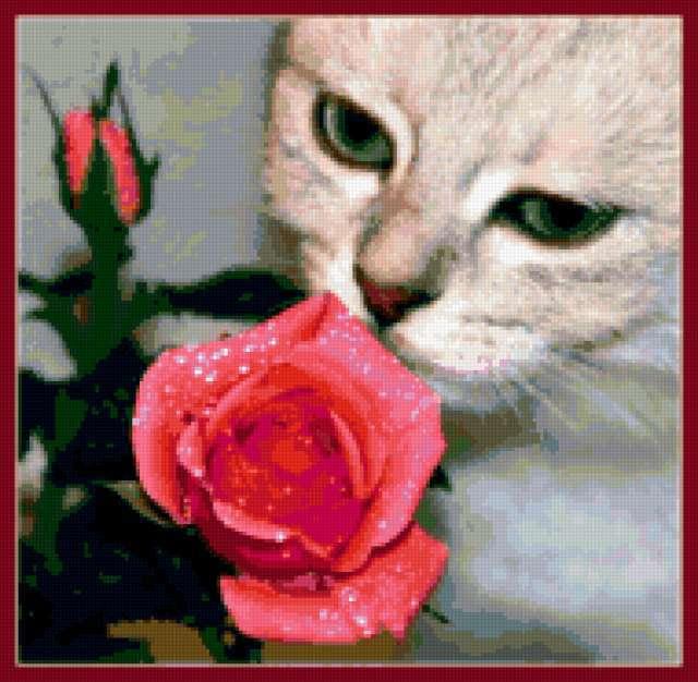Кот и роза, предпросмотр
