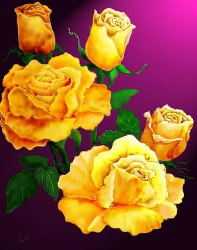 Желтые розы,