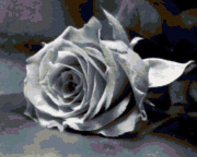 Схема вышивки «Роза (черно-белые ...: www.xrest.ru/overview/Роза (черно-белые...