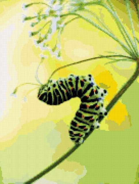 Гусеница махаона, предпросмотр