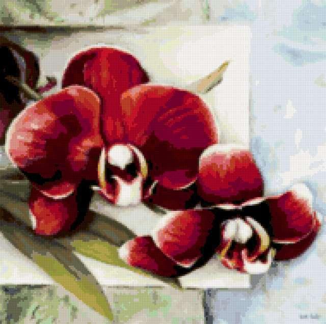 Архидея, предпросмотр