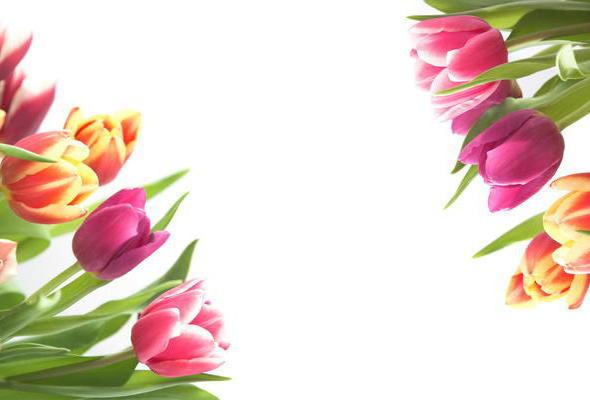 Тюльпаны рамка,