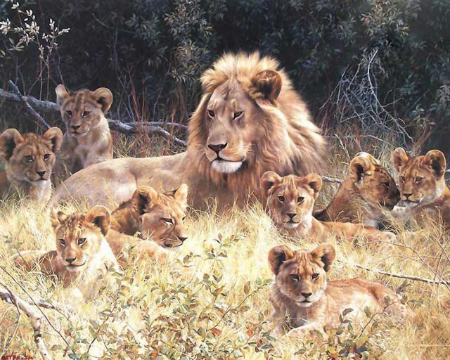 Лев, львята, семья, кошки,