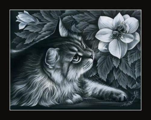 Вышивка котов на черной канве 212