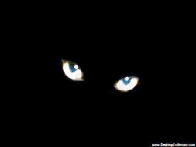 Кошачьи глаза, предпросмотр