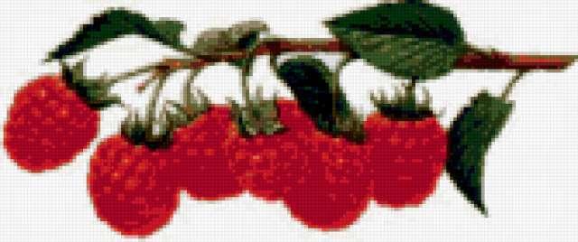 Ветка малины, предпросмотр