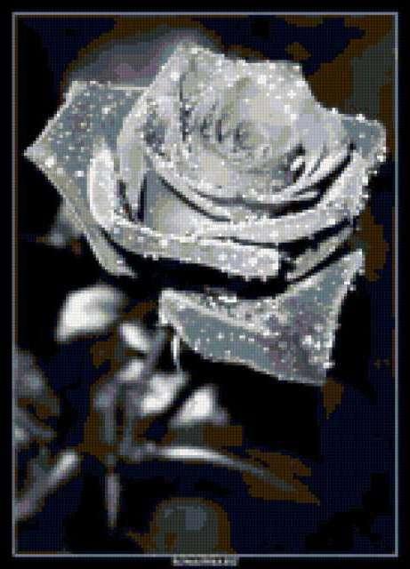 Черная роза, предпросмотр