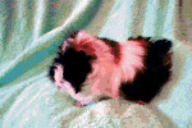 Морская свинка, предпросмотр