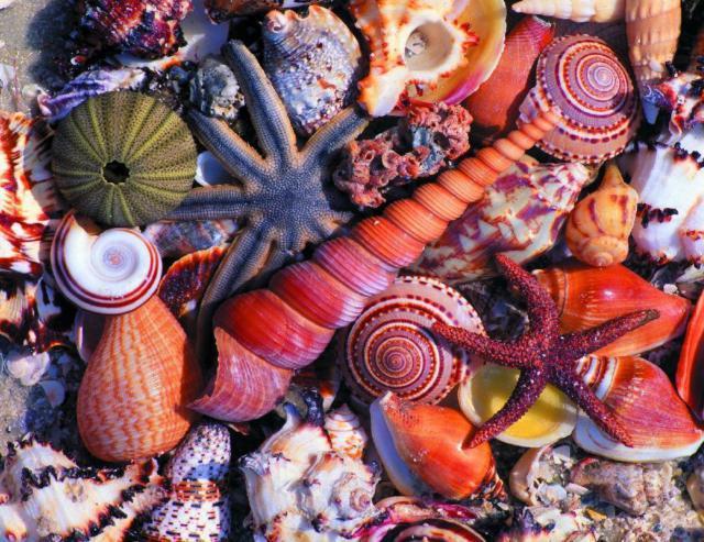 Морское дно, море, ракушки,