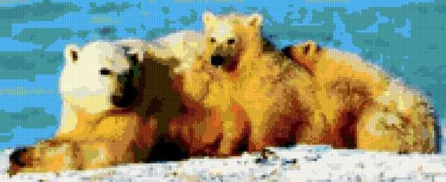 Полярные медведи, полярные