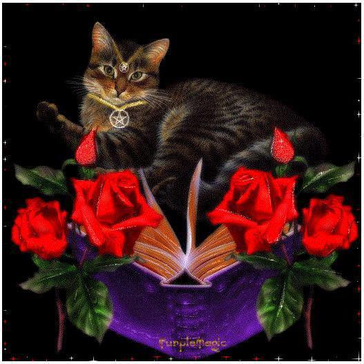 Кот ученый, открытка, животные