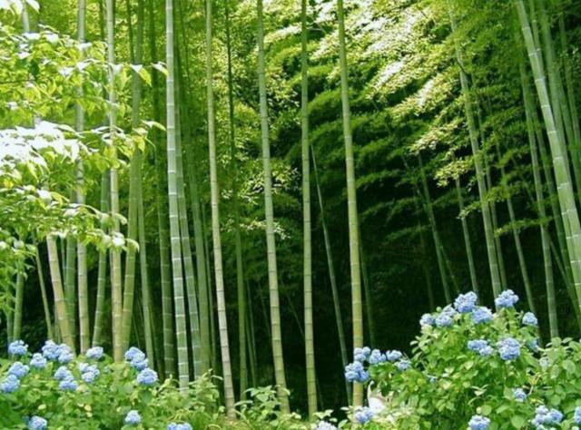 япония, китай, пейзаж