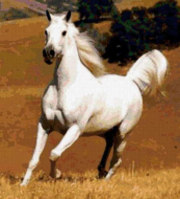 К схеме вышивки «Белая лошадь»