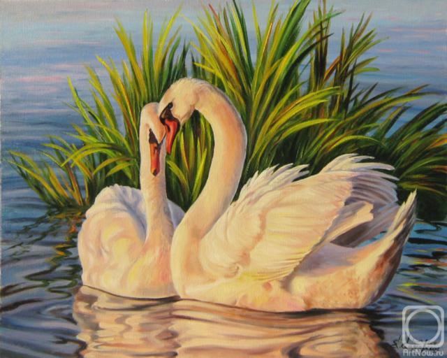 Лебединая верность, птицы