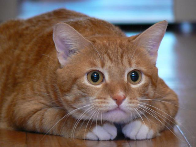схему вышивки «Рыжий кот».