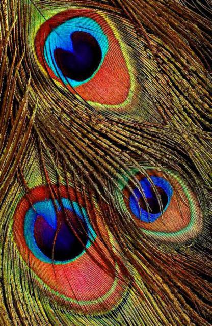 Панно Павлиньи перья, павлиньи