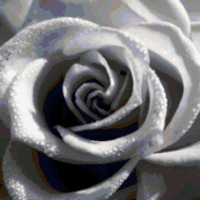 Черно-белое. Подушка. Роза