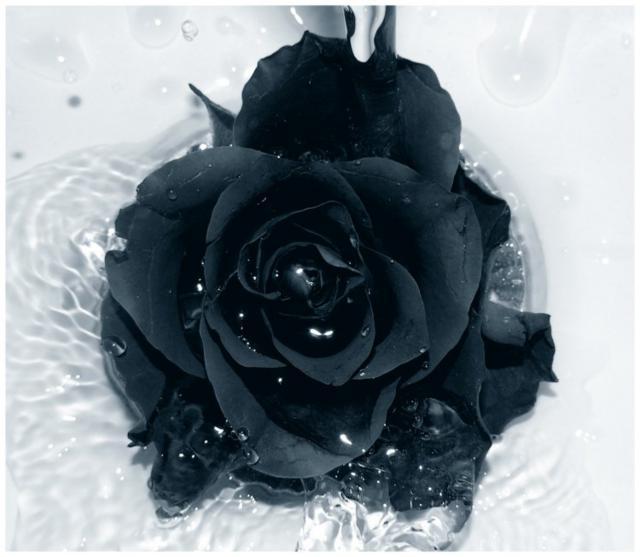 Черная роза 2, оригинал