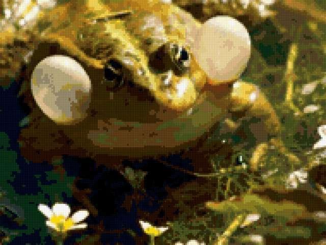 Улыбка жабы, предпросмотр