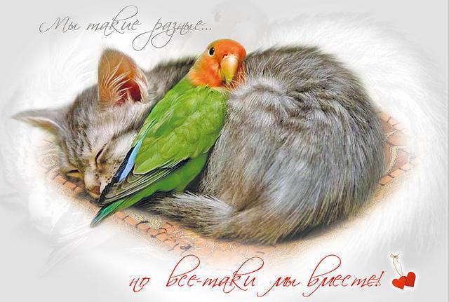 Кот и попугай, оригинал
