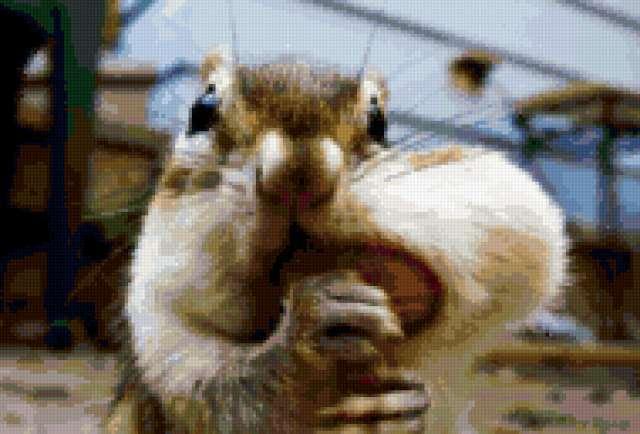 Бурундук с орехом