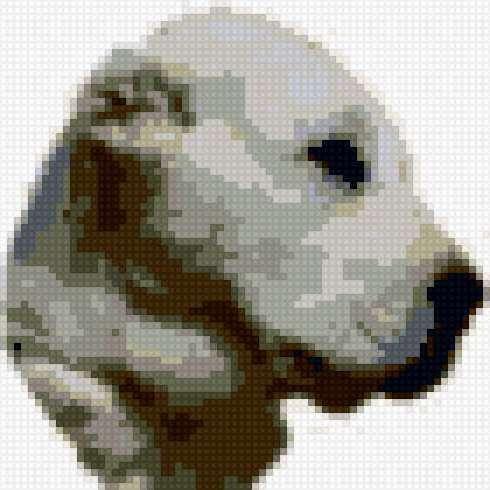 Среднеазиатская овчарка ,