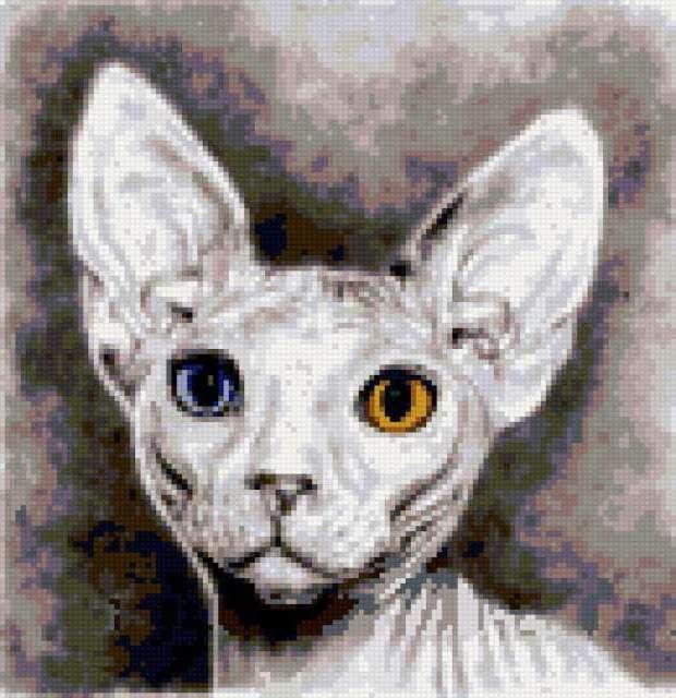 Котик Сфинкс, предпросмотр