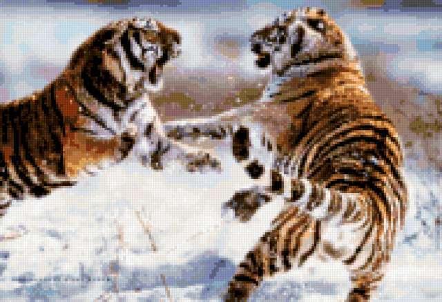Сибирский тигр, сибирский тигр