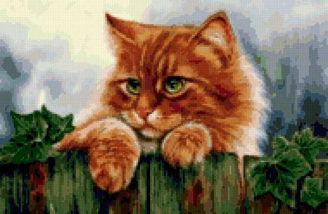 Кот на заборе, предпросмотр