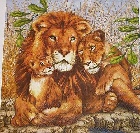 Львиное семейство, оригинал