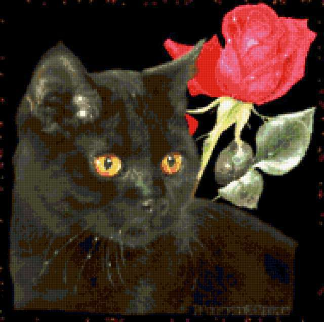 Черный кот и роза, открытка,