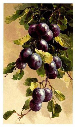 Сливы, фрукты, плоды, дерево,