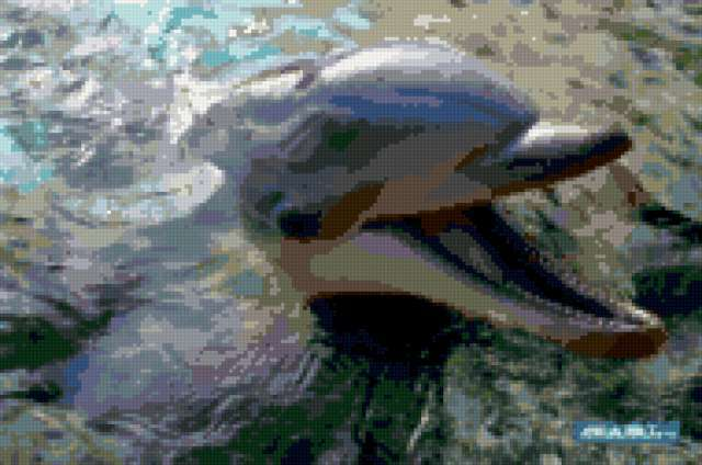 Дельфинчик, хорошенький