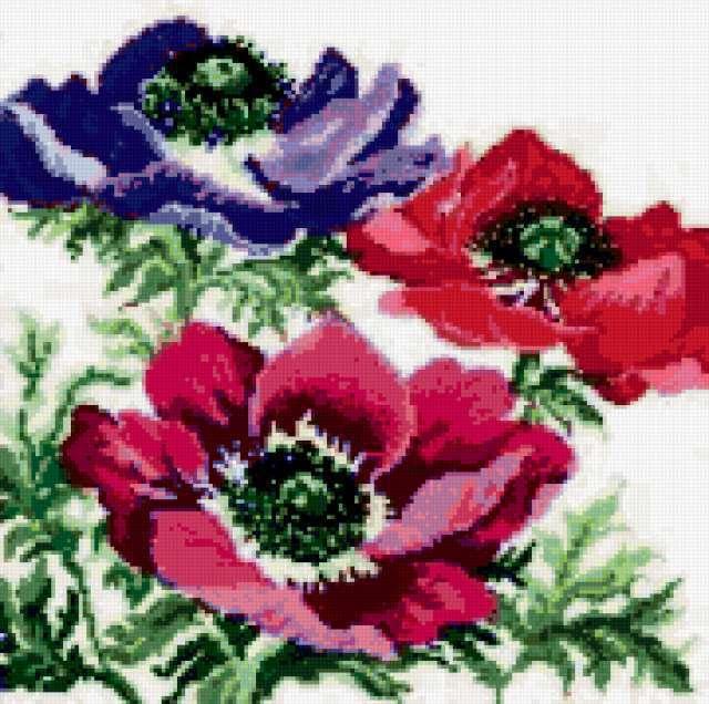 Цветики, цветочки, цветы, роза