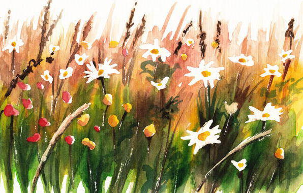 Летние цветы, лето, цветы,