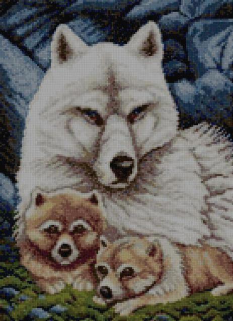 Волчица с волчатами 1,