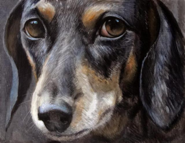 Такса, портрет, собака, такса