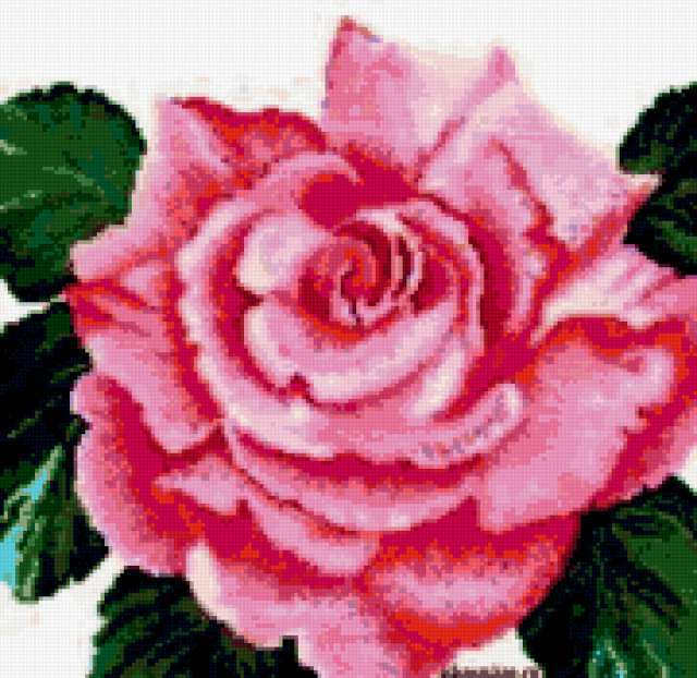 Подушка роза, цветы, флора,