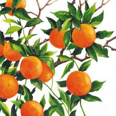 цитрусовые, апельсин