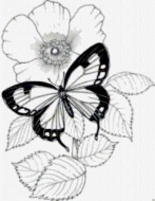 цветы, бабочка, монохром