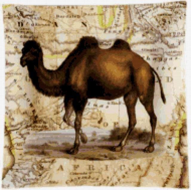 Верблюд, животные, африка