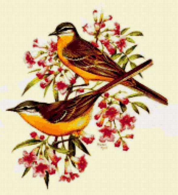 Птички на цветущей ветке,