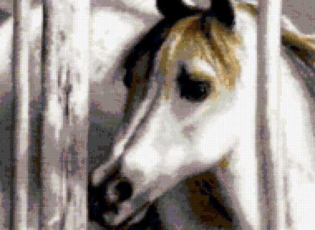 Белый жеребенок, предпросмотр